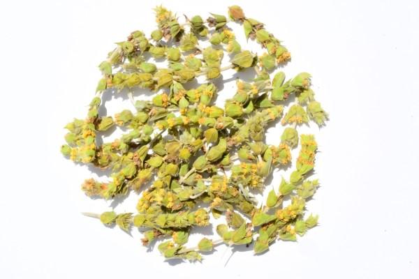 Sideritis Tea Mountain Tea